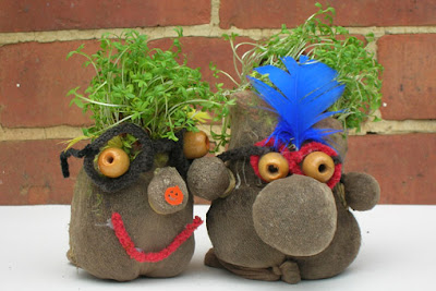 Cress heads from the Royal Horticultural Society
