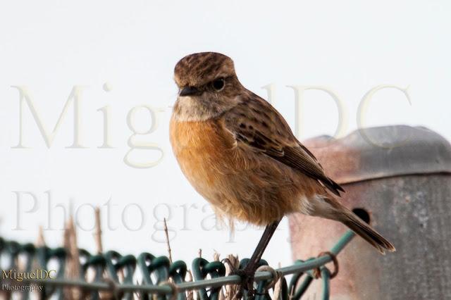 aves de Murcia