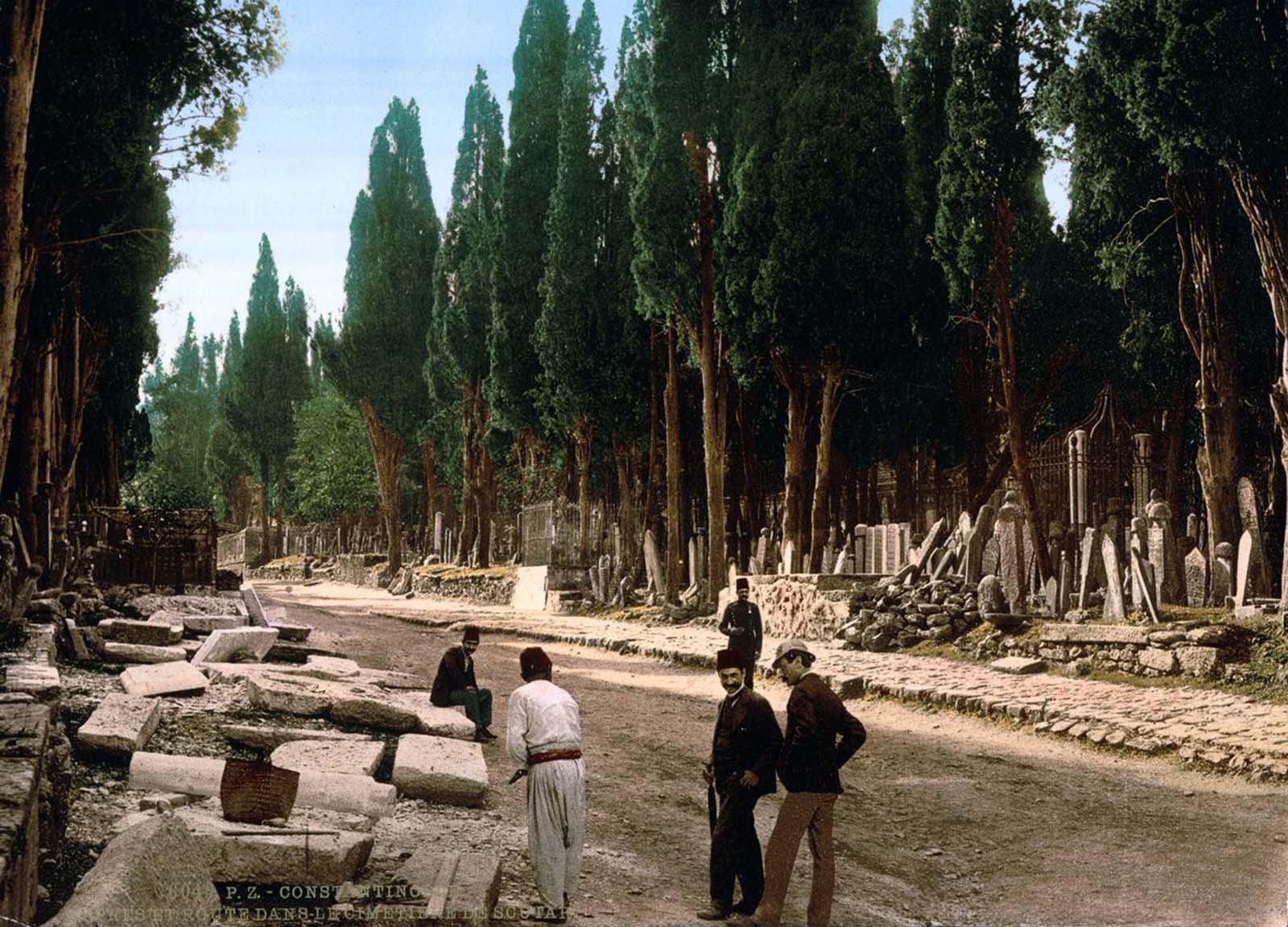 Cypresses along the road to the cemetery.