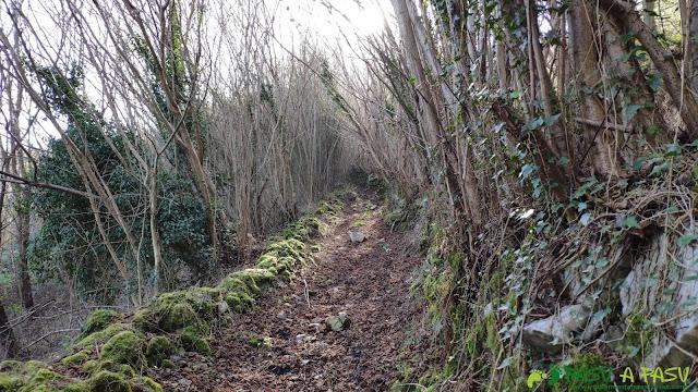 Sendero de subida al Pico Siones por la Ruta de la Salamandra