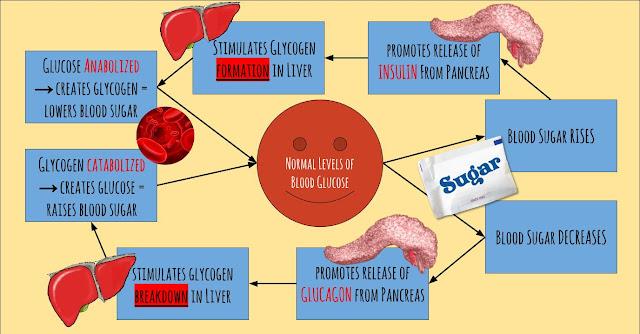 ... through Ins... Endocrine System Feedback Loop Diagram