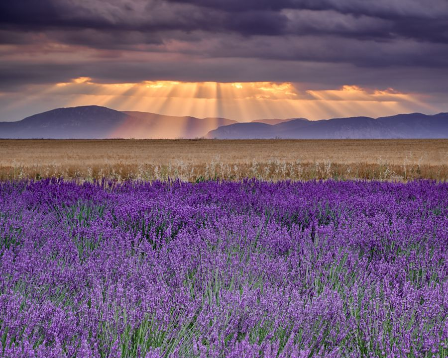 21. Sunbeams over Lavender by Michael Blanchette