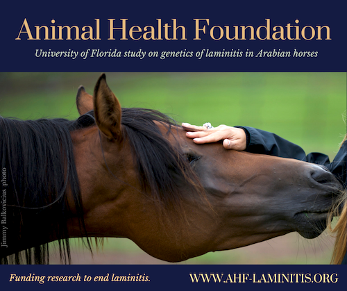 genetics of laminitis and equine metabolic syndrome