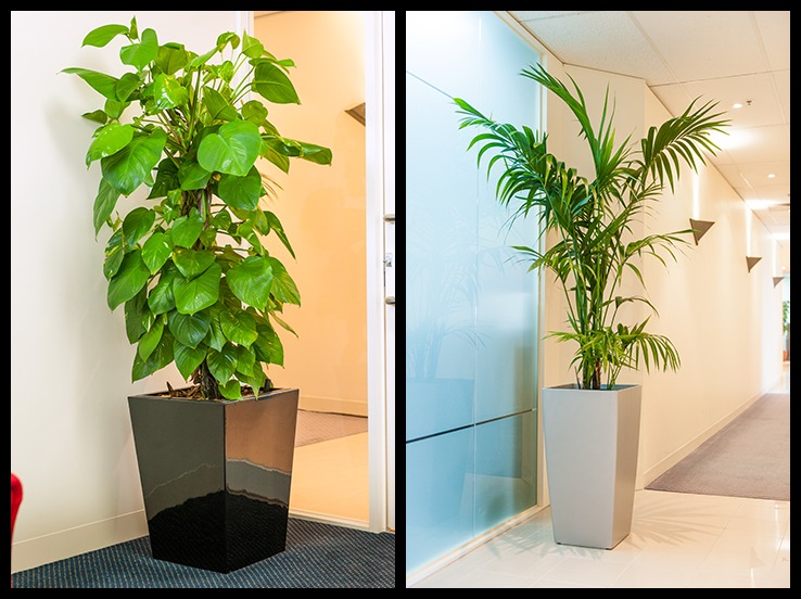 Indoor Plants Maintenance Best Indoor Plants For Office Indoor