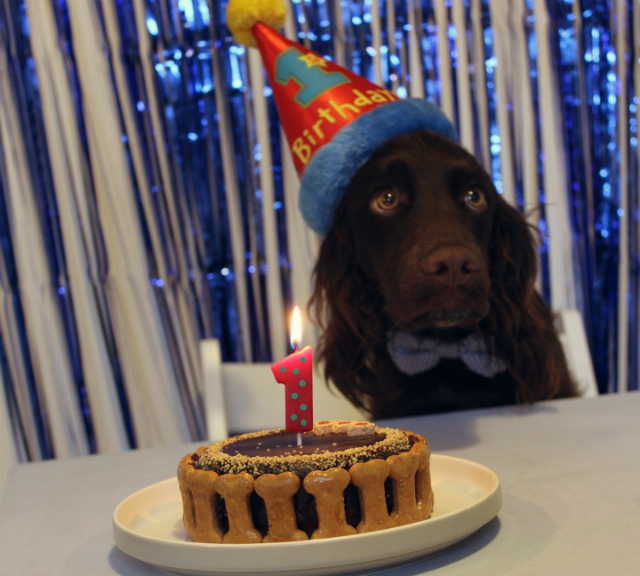 Sevs Birthday Party Steph The Spaniels Dog Friendly Lifestyle Blog