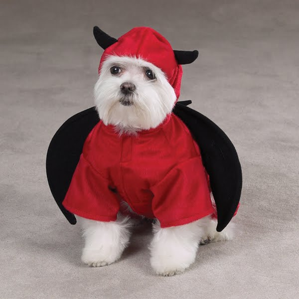 12 Creative and Unusual Dog Costumes. ~ LikePage