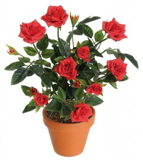gambar bunga mawar indah 36