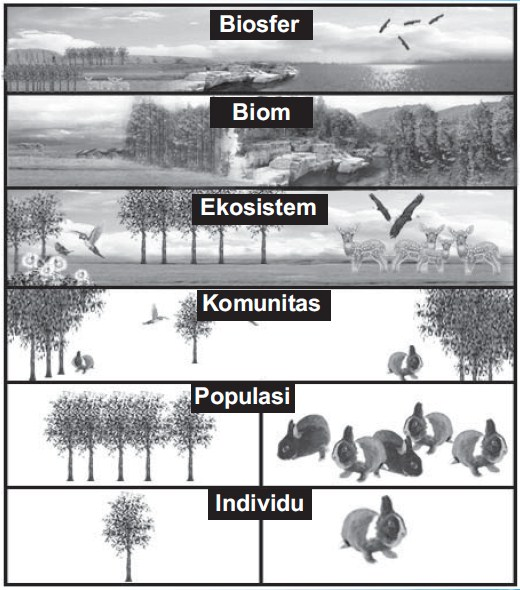 Pengertian Biosfer