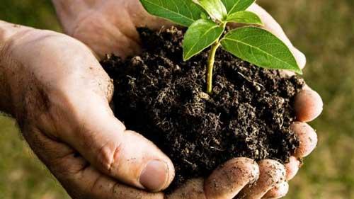 Peranan Bakteri yang Menguntungkan di Bidang Pertanian