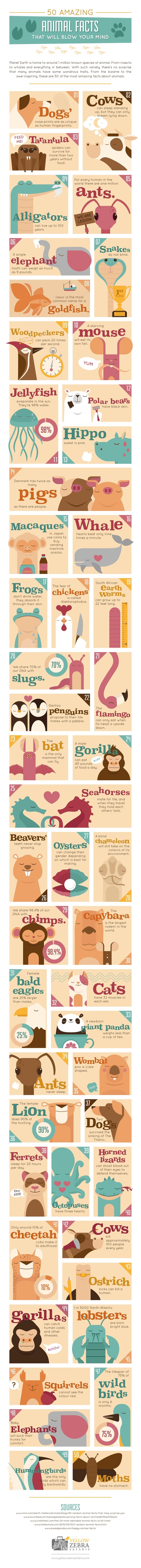 50 Amazing Animal Facts That Will Blow Your Mind #Infographic