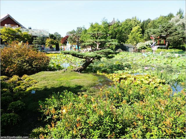 Vegetación del Jardín Chino, Montreal
