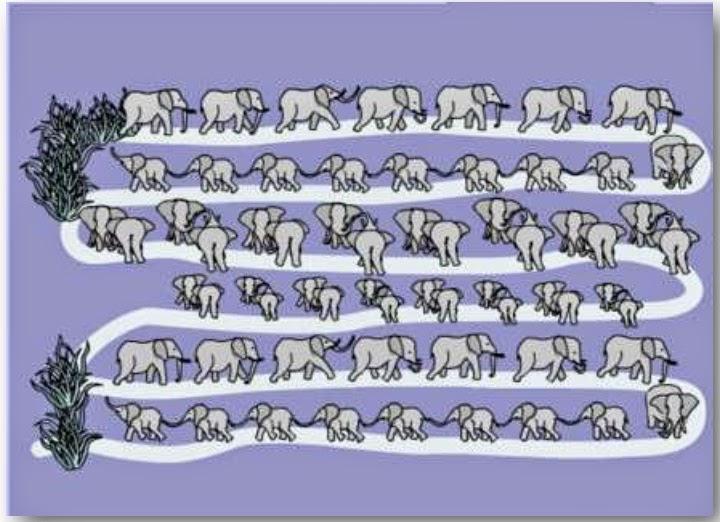 """""""El elefante"""""""