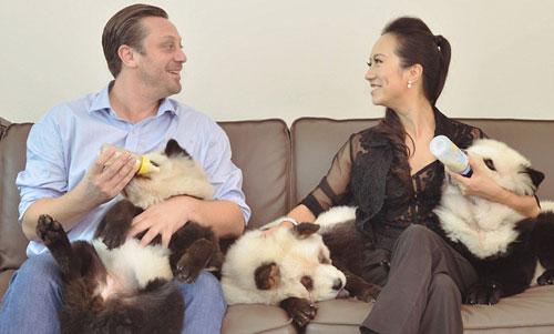Anjing Berbulu Panda, Lucu Atau Kejam?