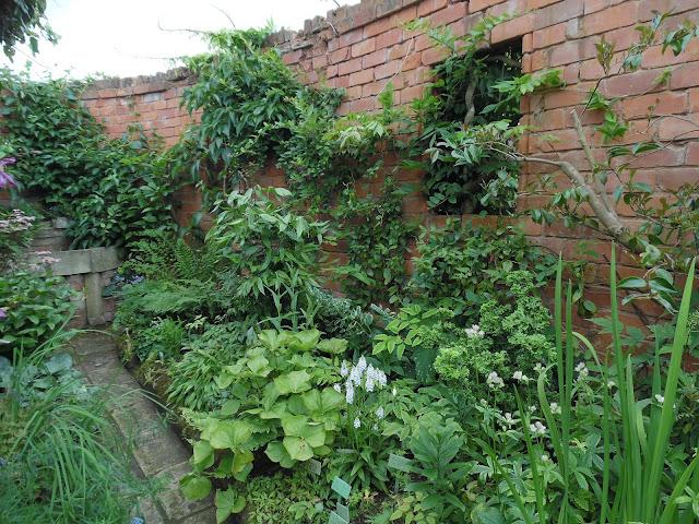 byliny pod ceglanym murem, pnącza