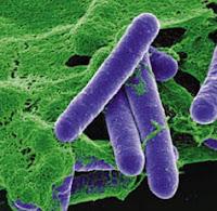Bakteri Heterotofrof