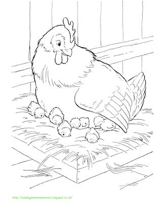 Gambar Mewarnai Ayam - 9