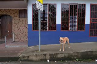 Dog on sidewalk in Puriscal.