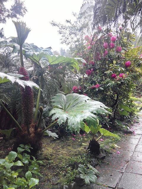 Jardines de hotel en fiordo Puyuhuapi, Chile