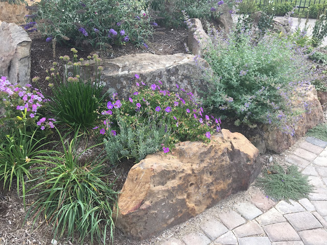fast growing native plants landscaping around water feature