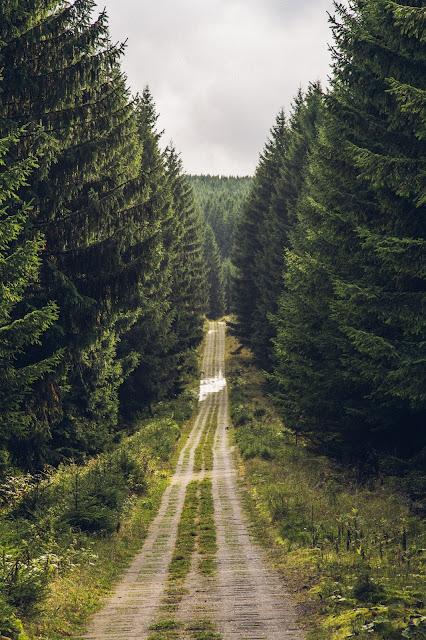 Bad Harzburger Teufelsstieg  Wanderung-Harz  Wandern – Von Bad-Harzburg auf den Brocken  Wandern-im-Harz  Abstieg Goetheweg zum Torfhaus 10