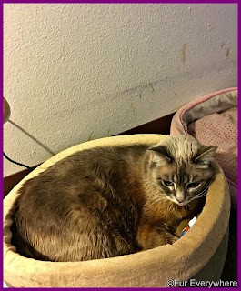 Milita in her heated bed.