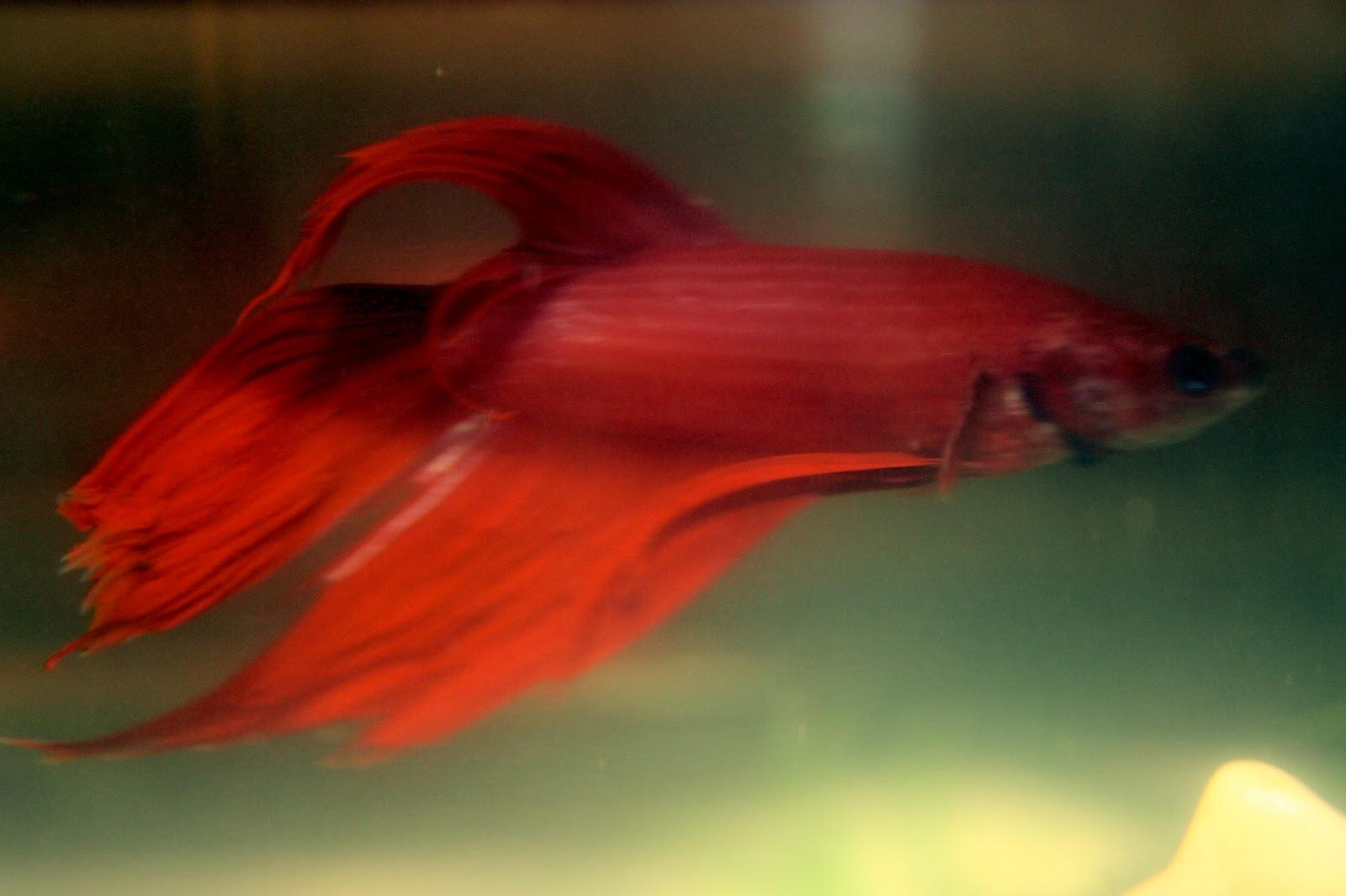 Unique Pet Fish Names |