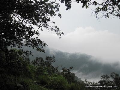 Neblina al Sur