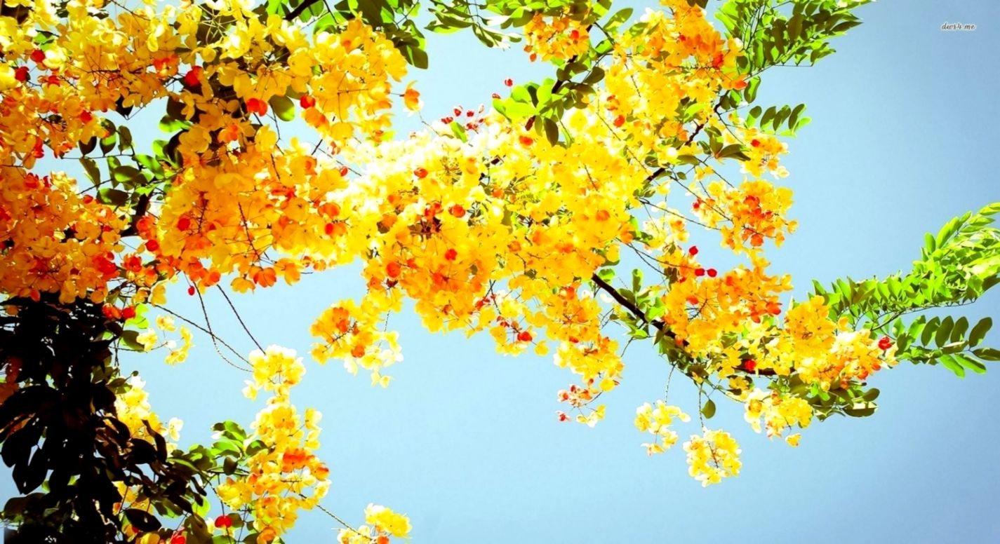 Yellow Flower Hd Desktop Background Its Wallpapers