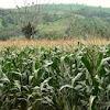 Investasi Sektor Pertanian Yang Selalu Menjanjikan