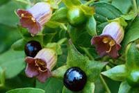 рецепты из цветовОт цветов на которые смотрят к цветам которые едят, цветы, съедобные цветы, травы, съедобные травы, какие цветы можно есть, какие цветы нельзя есть, цветы в кулинарии, съедобный букет, какие цветы можно добавлять в еду, советы кулинарные, экзотическая кулинария, еда, кулинария, едят ли цветы, как есть цветы, рецепты из цветов, как добавлять цветы в еду,