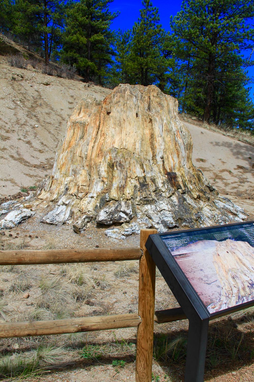 Colorado Lifestyle: Florissant Fossil Beds: Petrified