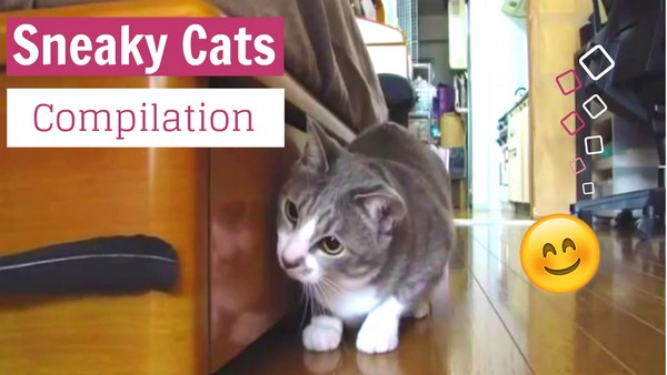 Sneaky funny cats pets video Funpetvid