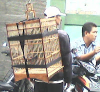 Tas Gendong bawa kandang burung