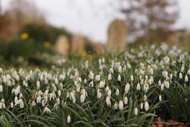 Best UK photography blog Norfolk countryside