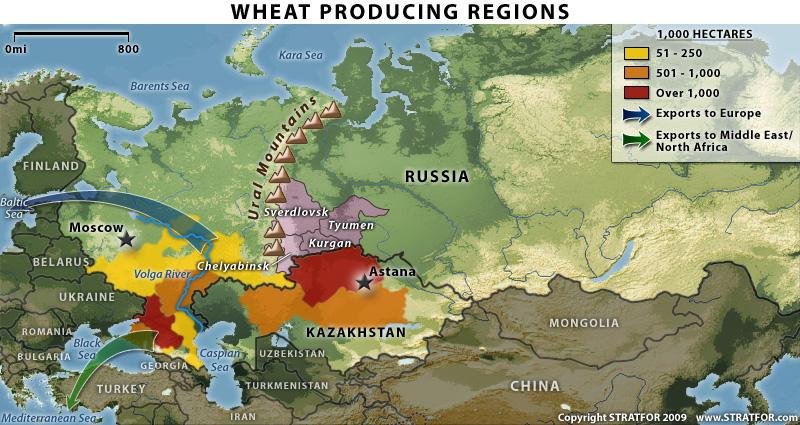 RUSIJA PRKOSI SANKCIJAMA – Nikad veći prinos pšenice, kreće izvoz u Kinu i na bliski istok!
