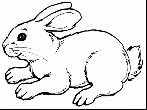 Stunning Bunny Rabbit Coloring Pages With Coloring Pages Of And Coloring  Pages Of Fish