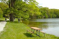 Göl kenarındaki ağaçlık bir mesire yeri ve su kenarındaki piknik masası