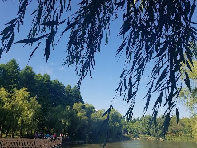 金桥公园插图