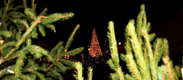 albero, albero di Natale, luci, luminarie, Natale 2017, rami