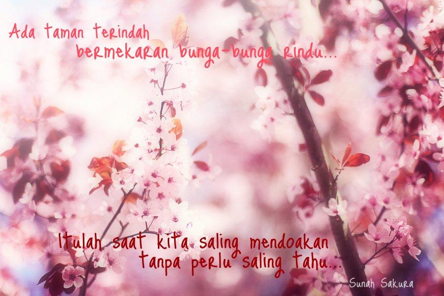 Kata Kata Tentang Bunga Sakura Mawar Ku