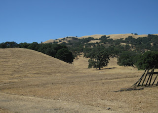 Oak-studded, shimmering golden hills along San Felipe Road, San Jose, California