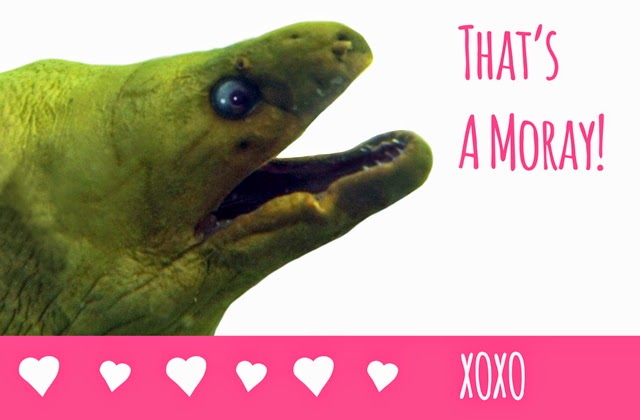 Valentine ecard free thats a moray