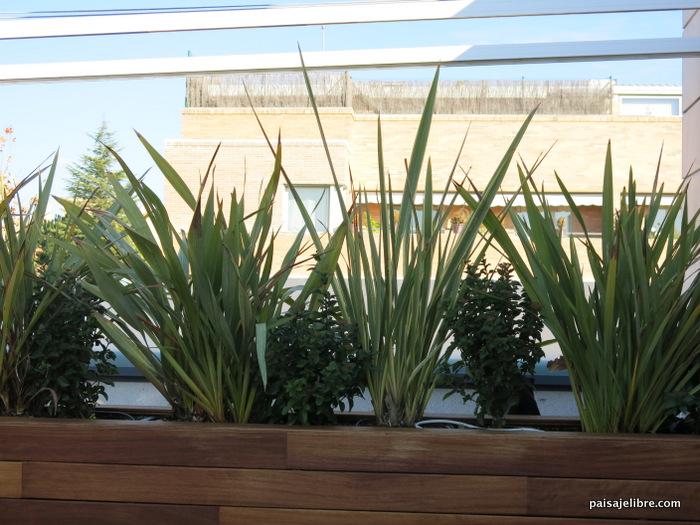 Las 6 mejores plantas de sol para terrazas y ticos for Plantas en balcones y terrazas