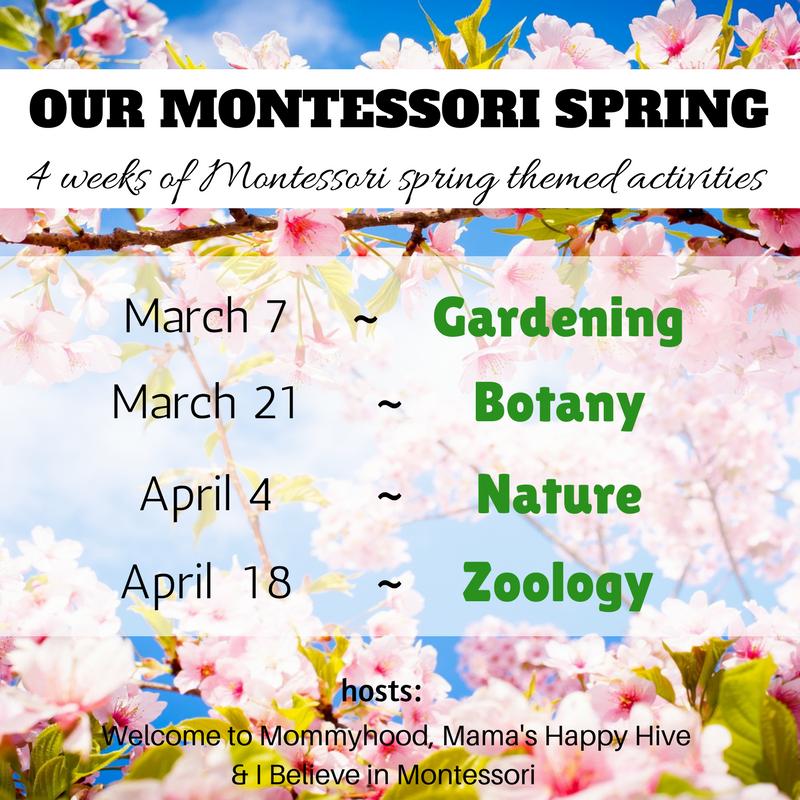 Our Montessori Path Through Life