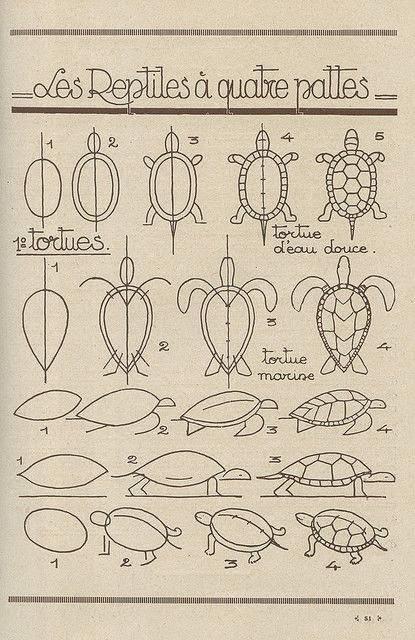 Cara Menggambar kura-kura - dalam aneka model