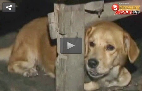 Drunk Man Rapes Dog in Cebu