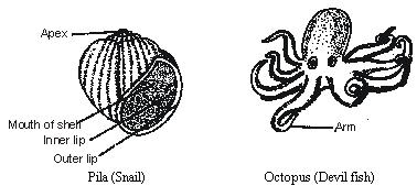 mollusca diagram labeled 05 kia sedona wiring bio world phylum