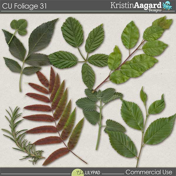 http://the-lilypad.com/store/digital-scrabooking-CU-foliage-31.html