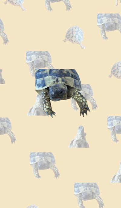 Cute tortoise theme