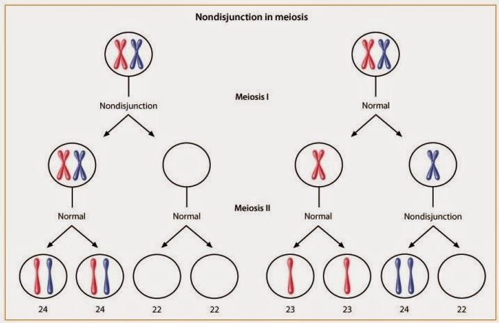 Biologi gonzaga syndrome jacobs non disjunction kita dapat mengetahui penyebab dan dampak dari kelainan pada kromosom salah satu dari kejadian non disjunction ini adalah syndrom jacob ccuart Images